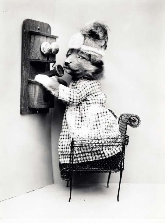 dog-on-phone-vintage-photo