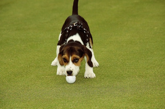 golf-619503_960_720